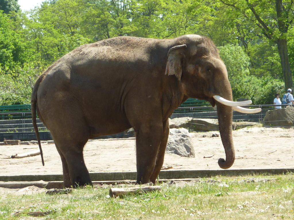 bild asiatischer elefant zu tierpark friedrichsfelde in berlin lichtenberg. Black Bedroom Furniture Sets. Home Design Ideas