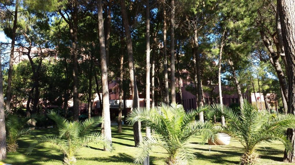 Garden Paloma Recipes — Dishmaps