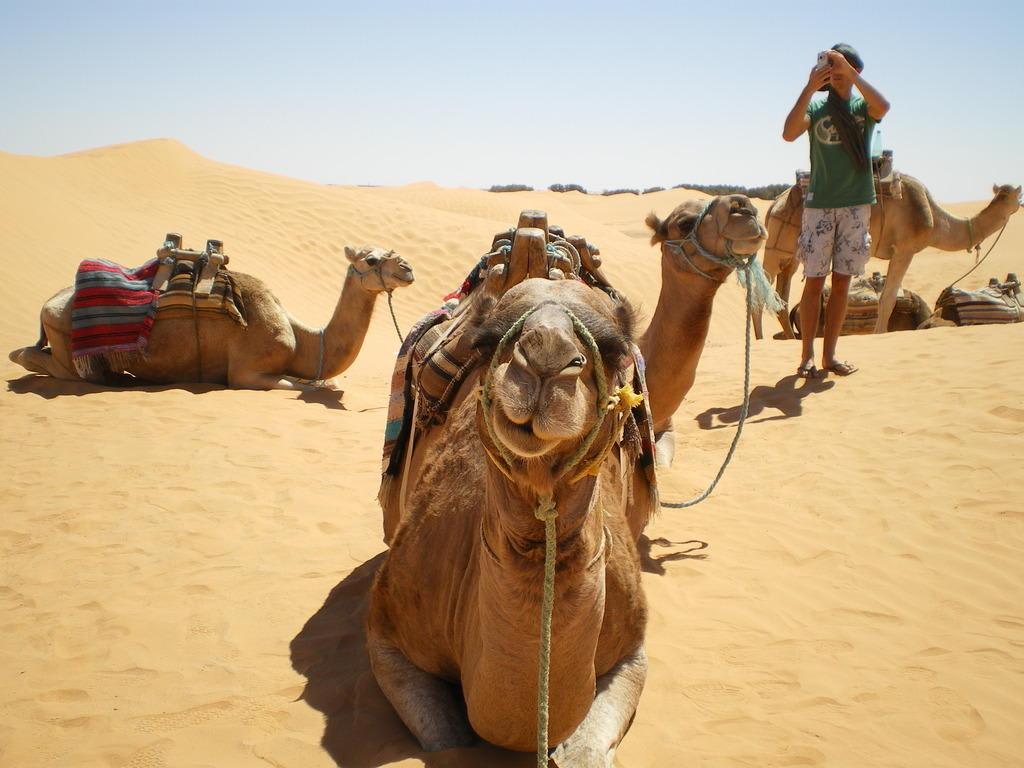 Sahara Animals