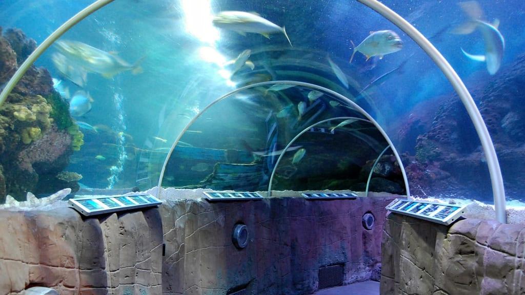 Beim Gang durch den Tunnel im SeaLife Timmendorfer Strand f?hlt man ...