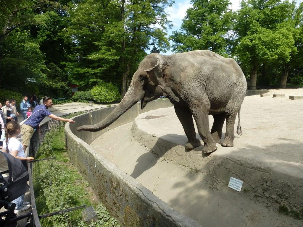 bild kinder f ttern die elefanten zu tierpark hagenbeck in hamburg. Black Bedroom Furniture Sets. Home Design Ideas