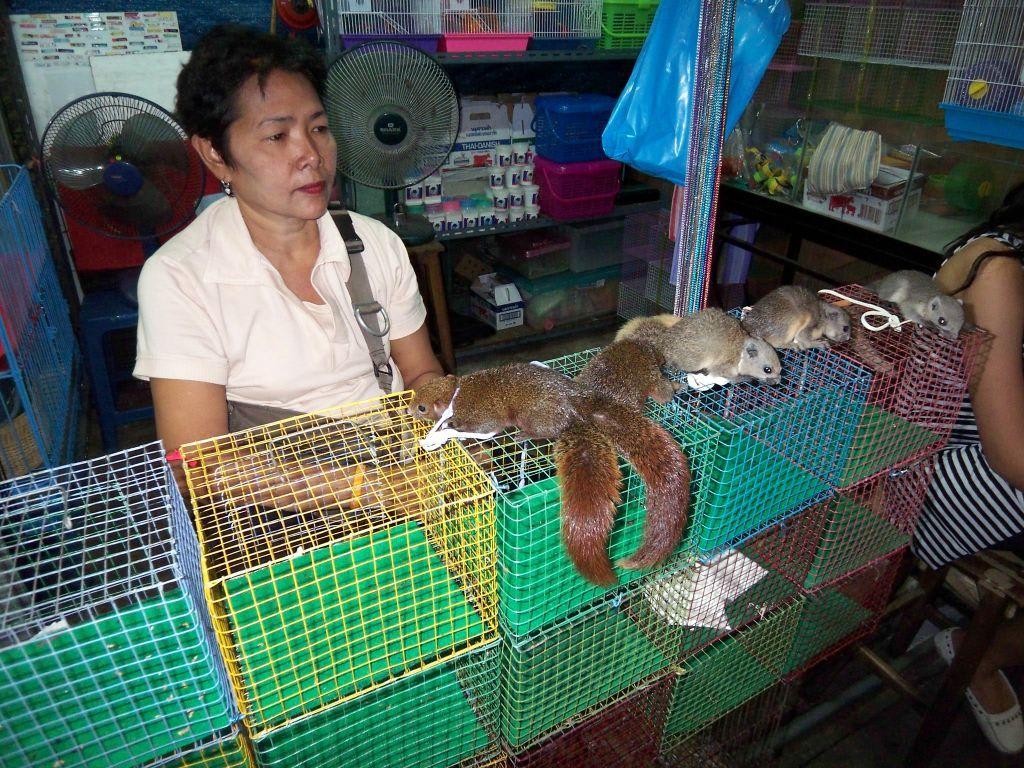 bild eichh rnchen zum verkauf zu chatuchak weekend market in bangkok. Black Bedroom Furniture Sets. Home Design Ideas