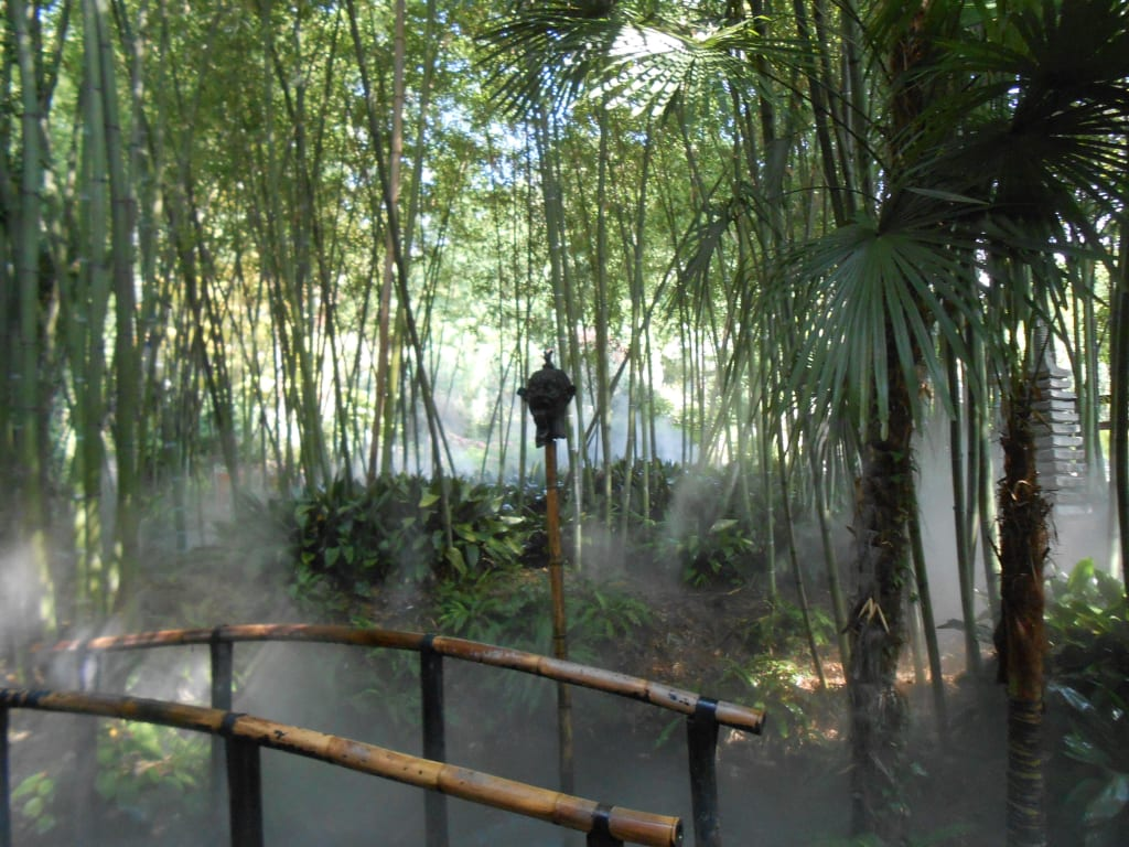 Bild Bambusgarten Mit Künstlichem Nebel Zu Botanischer Garten