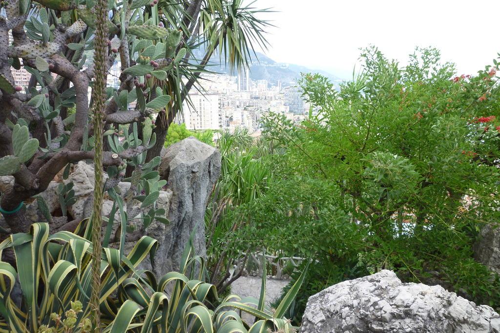 Bild Pflanzen Zu Botanischer Garten Monaco Monte Carlo In Monaco