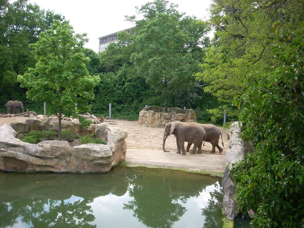 Bild elefanten zu zoo dresden in dresden for Hotelsuche dresden