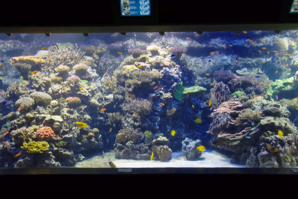 bild riff zu tropen aquarium hagenbeck in hamburg. Black Bedroom Furniture Sets. Home Design Ideas