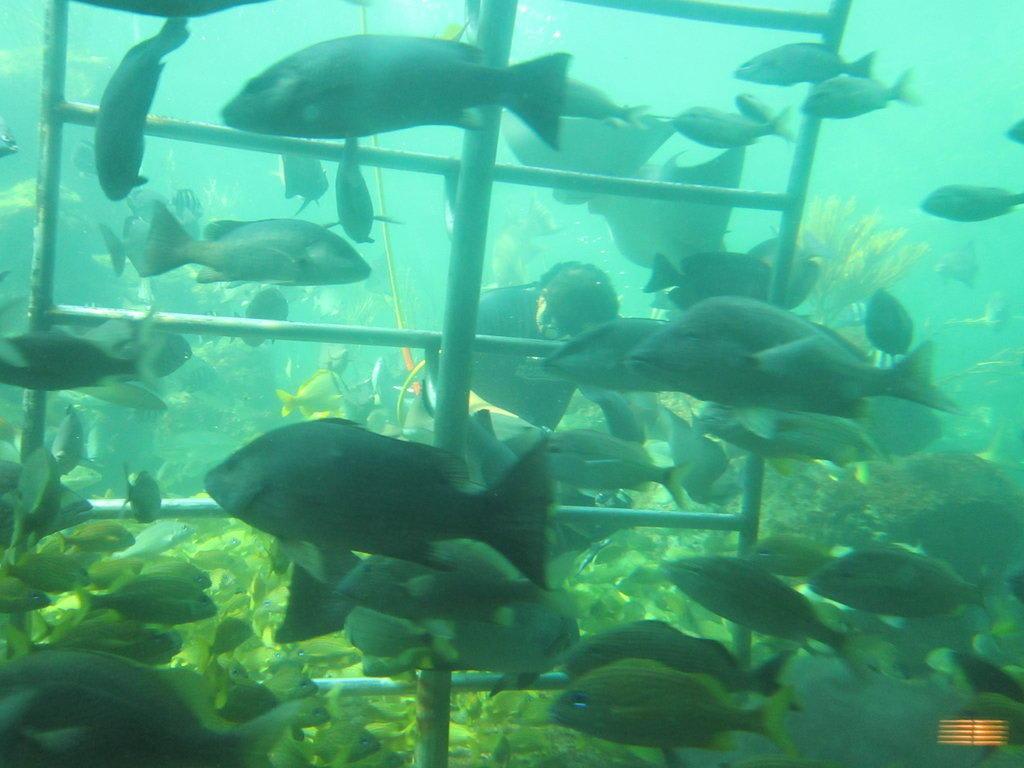 """Sehr Bild """"Fütterung der Aquarium-Fische"""" zu Seaquarium in Key Biscayne JY74"""