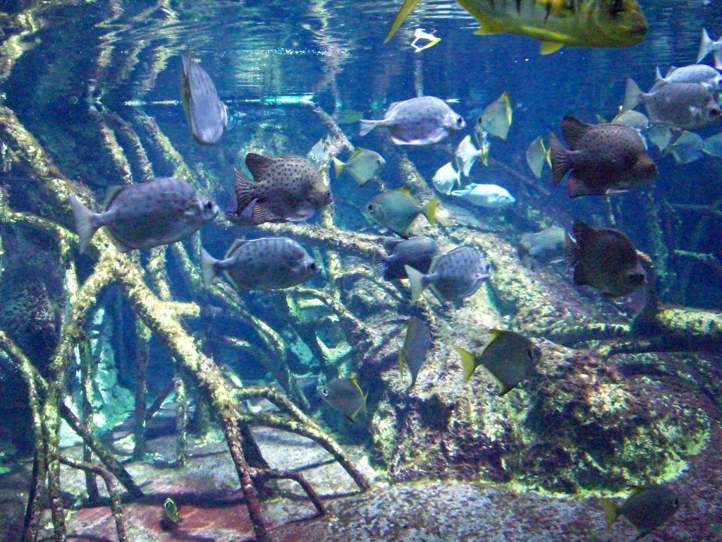 Bild fische 3 zu aquarium zoologischer garten in for Fische aquarium