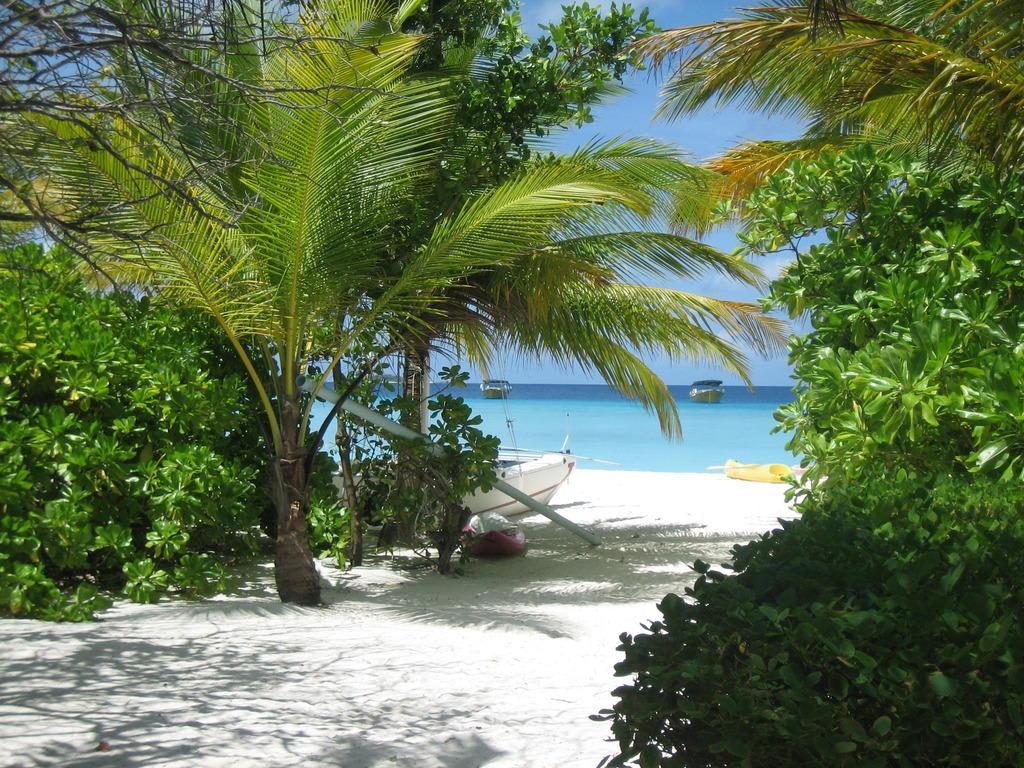 bild strand palmen und meer zu summer island maldives in mal. Black Bedroom Furniture Sets. Home Design Ideas