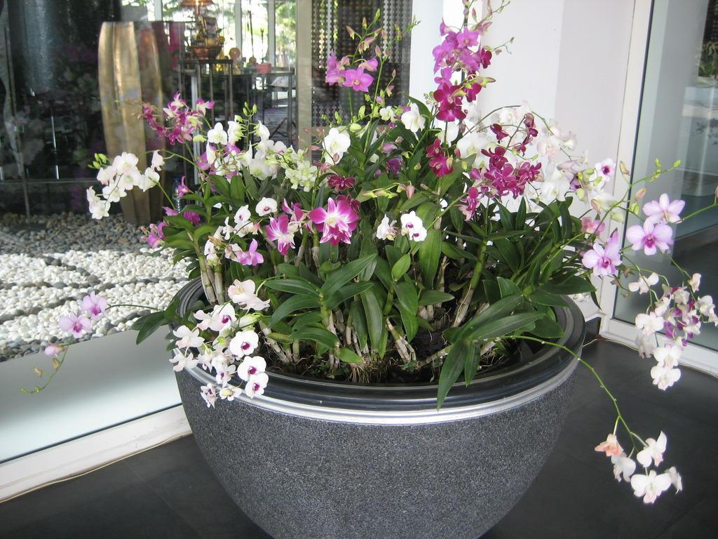 """Bild """"Orchideen-Deko"""" Zu BEST WESTERN PREMIER Hotel"""