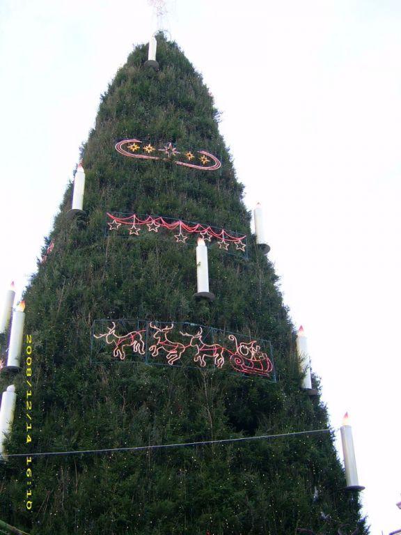 Weihnachtsmarkt Dortmund Bis Wann.Bild Der Größte Weihnachtsbaum Zu Weihnachtsmarkt Dortmund In Dortmund