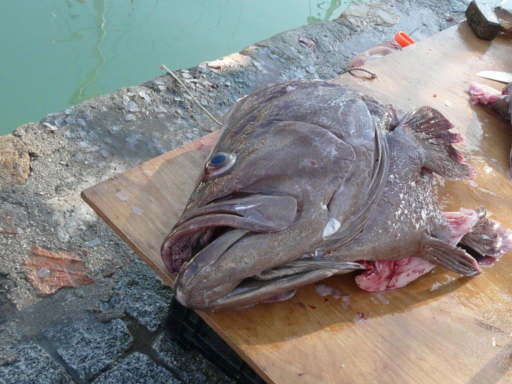 Fischlopf