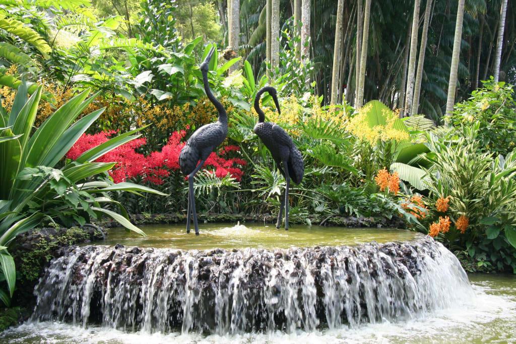 bild im orchideen garten in singapore zu botanischer. Black Bedroom Furniture Sets. Home Design Ideas