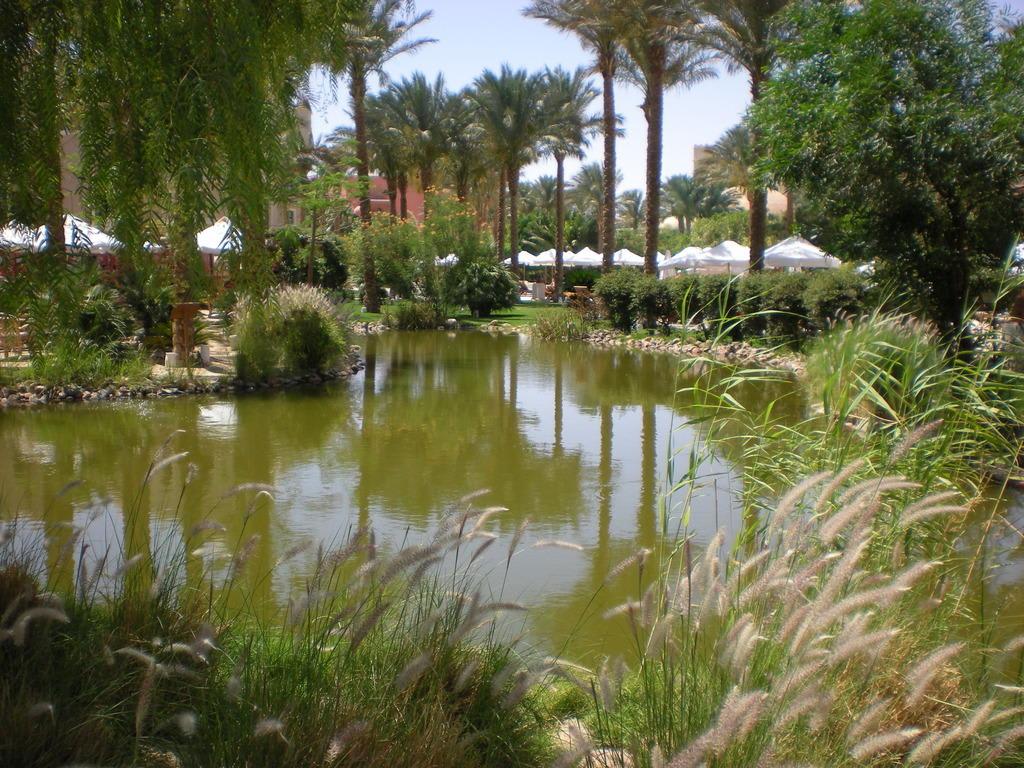 Bild ein teich mit koi karpfen zu hotel makadi palace in for Gartenanlage mit teich