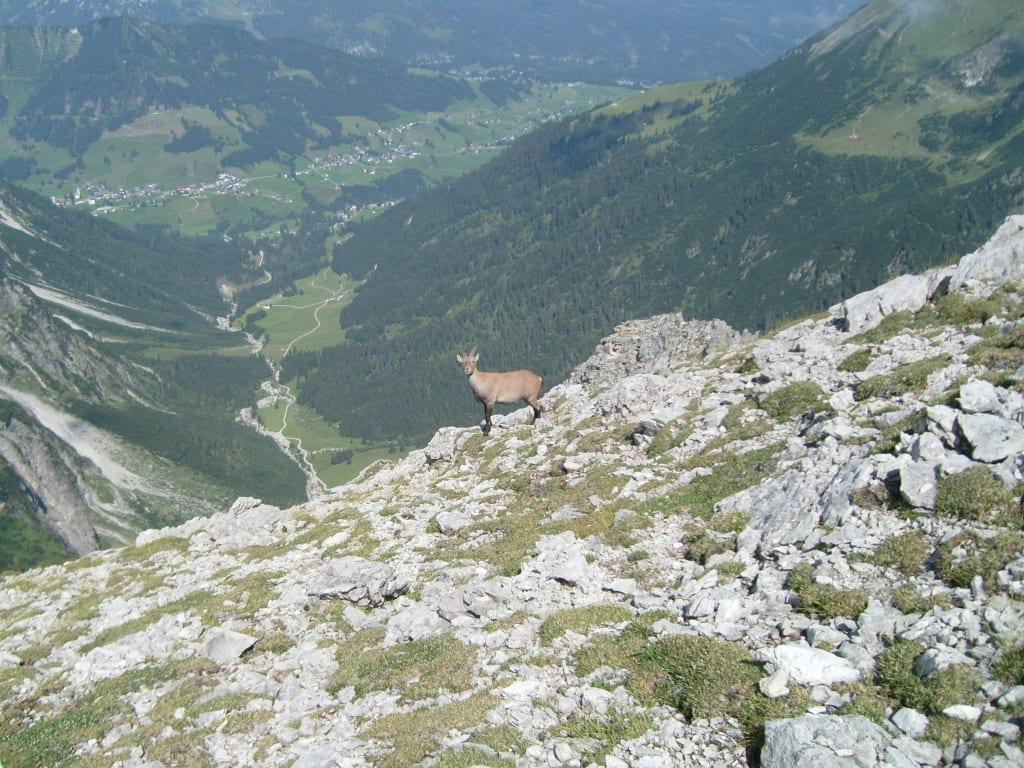 Klettersteig Mindelheimer : Datei mindelheimer klettersteig g u wikipedia