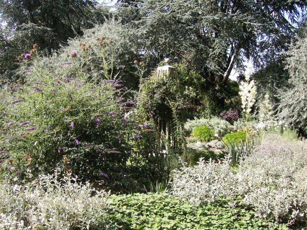 bild bl hende pflanzen zu botanischer garten klein flottbek in hamburg. Black Bedroom Furniture Sets. Home Design Ideas