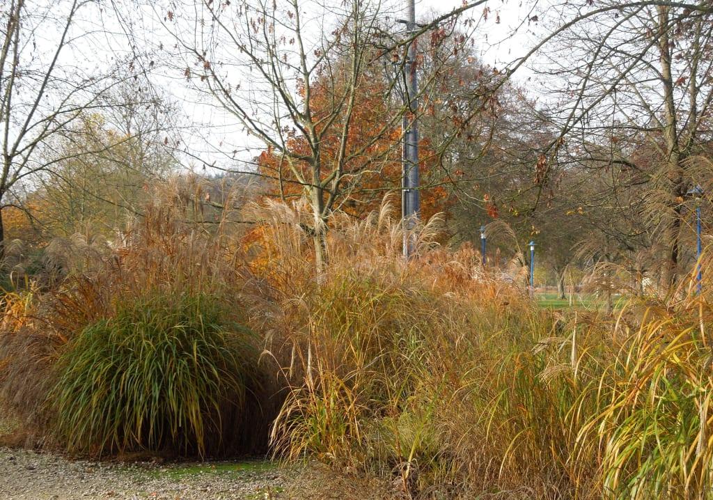 bild gr sergarten zu botanica park in bad schallerbach. Black Bedroom Furniture Sets. Home Design Ideas