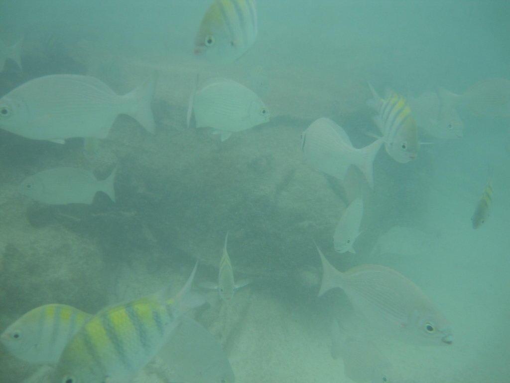 Mallorca Fische