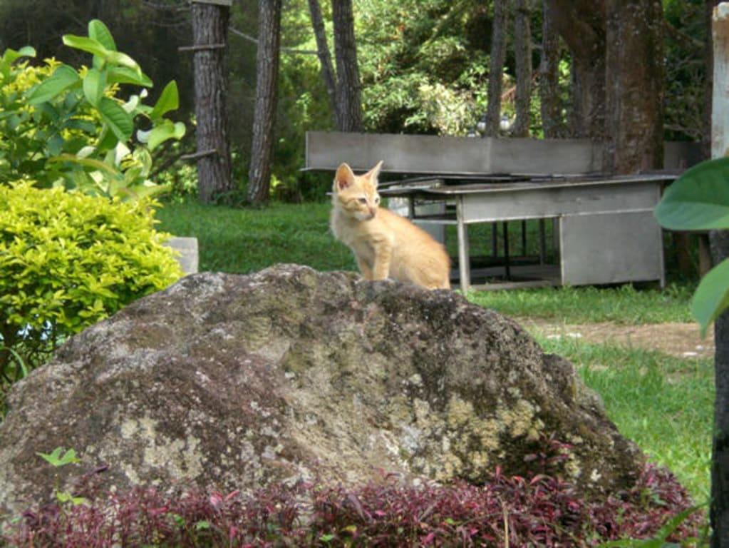 Kleine Muschi auf Stein sitzend im Garten Bilder Gartenanlage Grand Mutiara Hotel & Resort