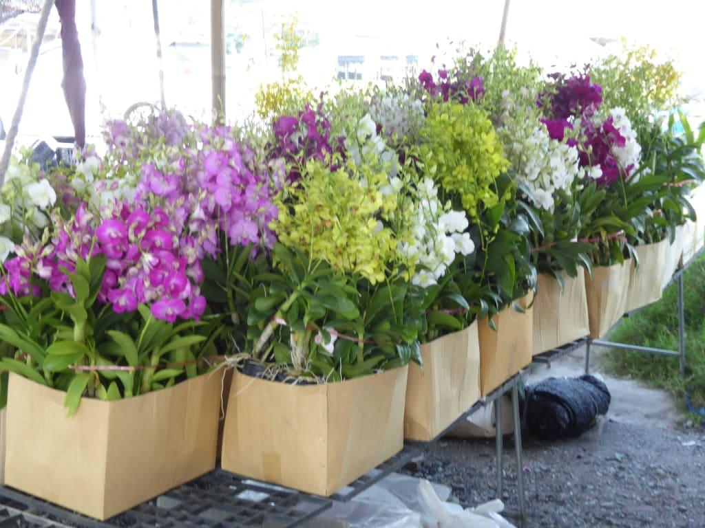 bild orchideen ber orchideen und farben zu blumenmarkt. Black Bedroom Furniture Sets. Home Design Ideas