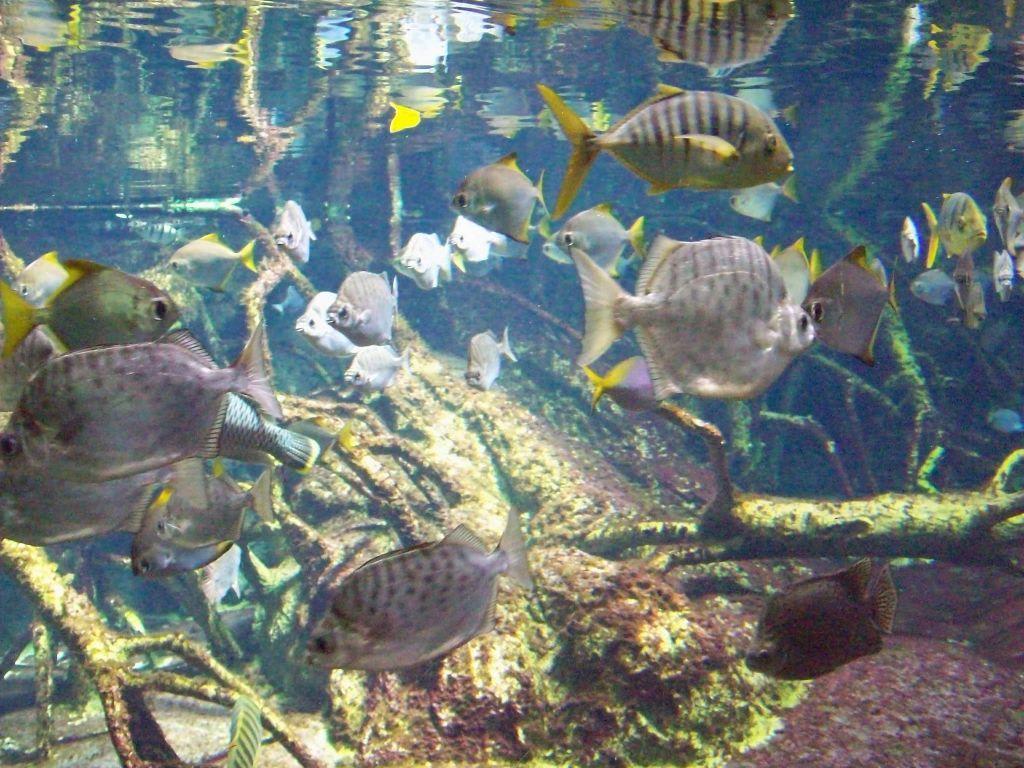 Bild fische zu aquarium zoologischer garten in berlin for Garten fische