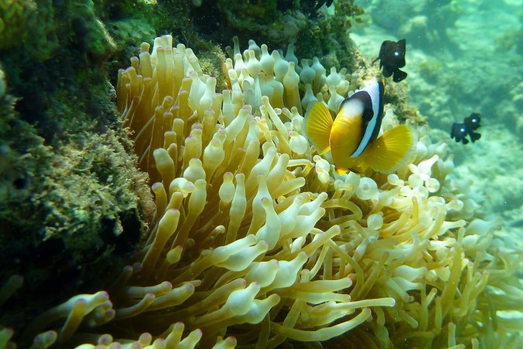 Reefs/Corals