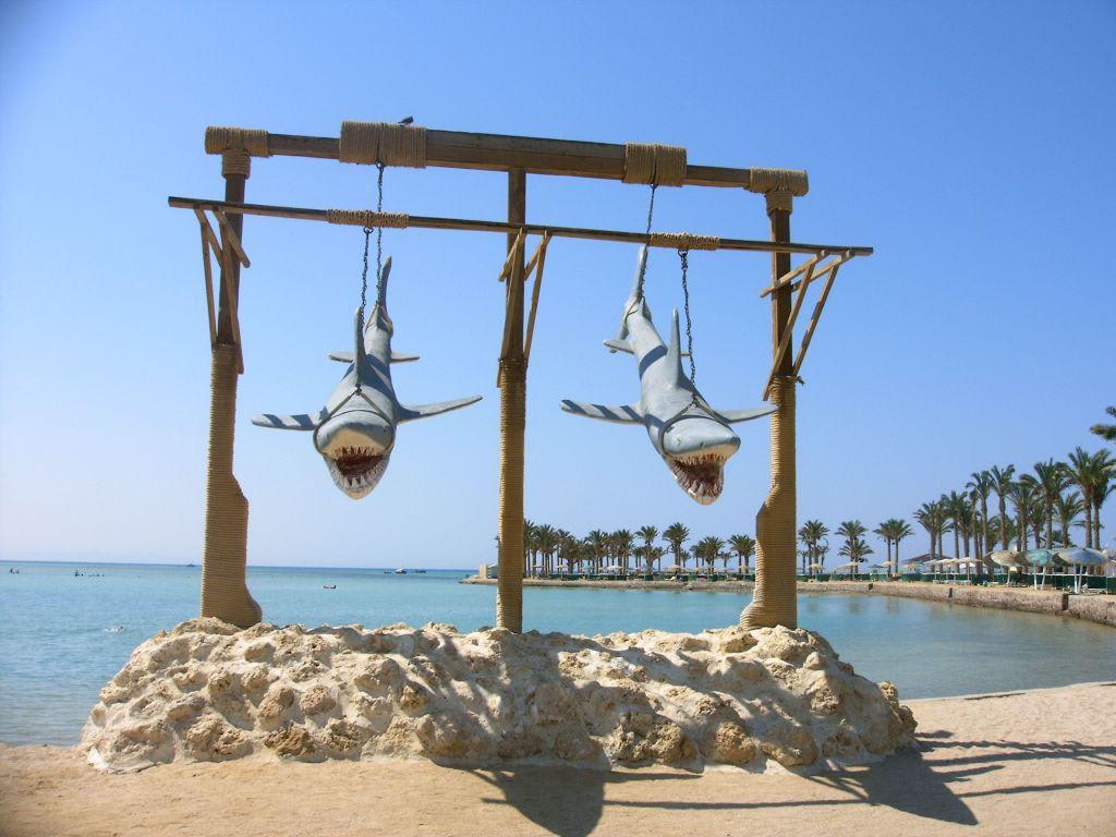 Haie Hurghada