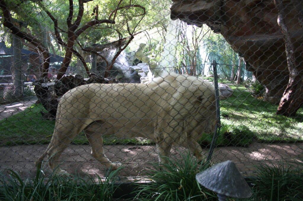 Bild L Wengehege Zu Siegfried Roys Secret Garden In Las Vegas