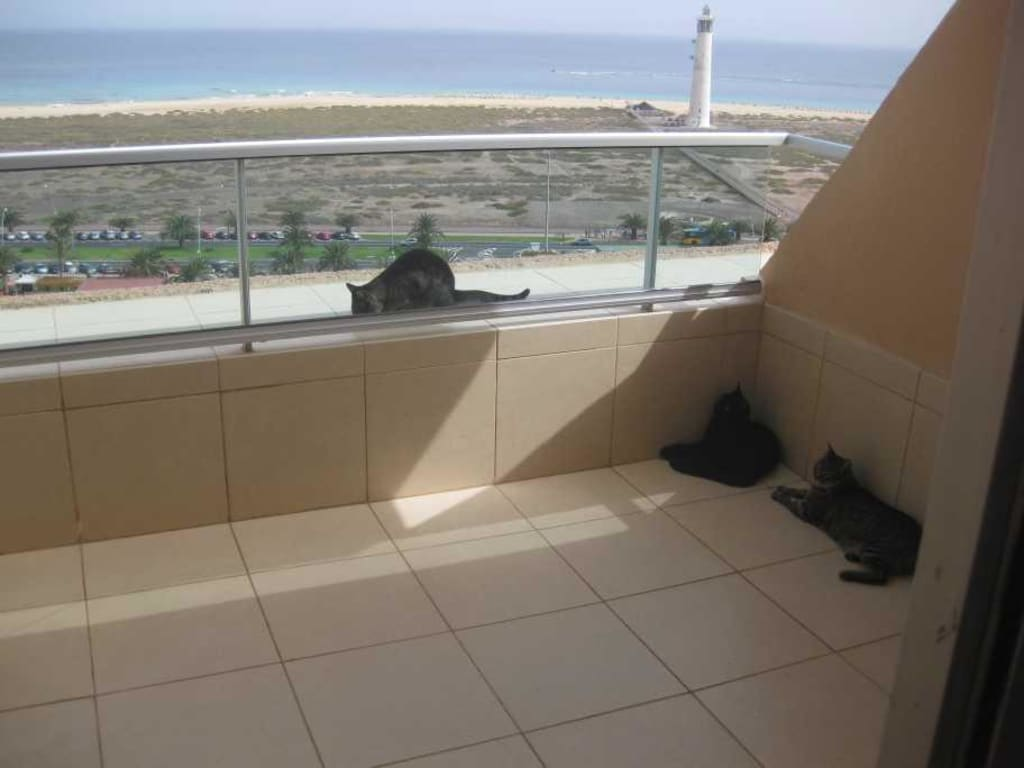 bild katzen auf balkon zu hotel stella jandia in jandia playa de jandia. Black Bedroom Furniture Sets. Home Design Ideas