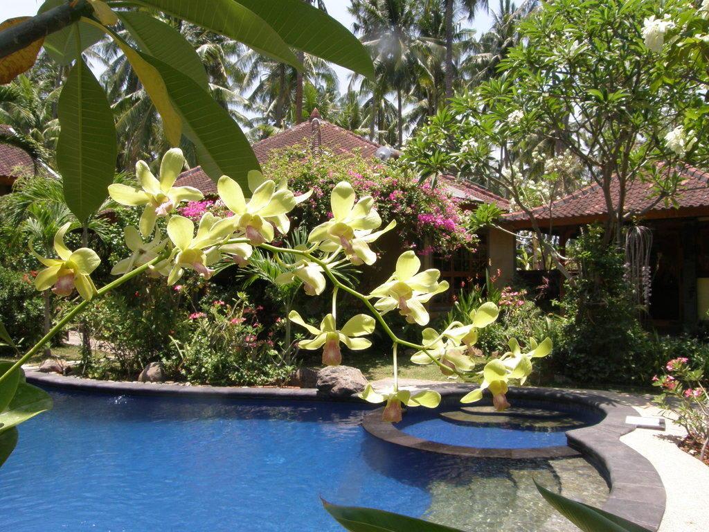 bild pool umgeben von pflanzen und b umen zu saraswati holiday house in lovina. Black Bedroom Furniture Sets. Home Design Ideas