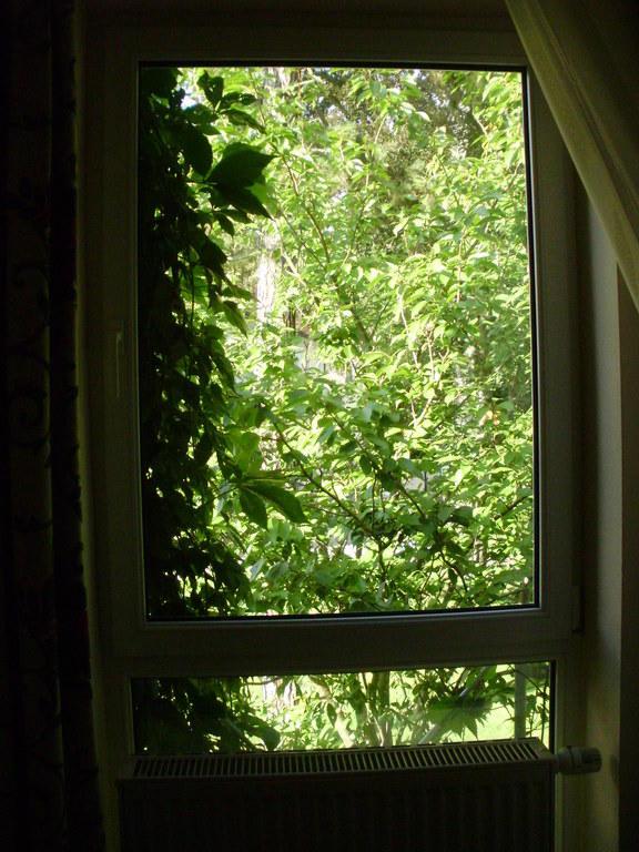 bild zimmerfenster zu hotel schloss schweinsburg in. Black Bedroom Furniture Sets. Home Design Ideas