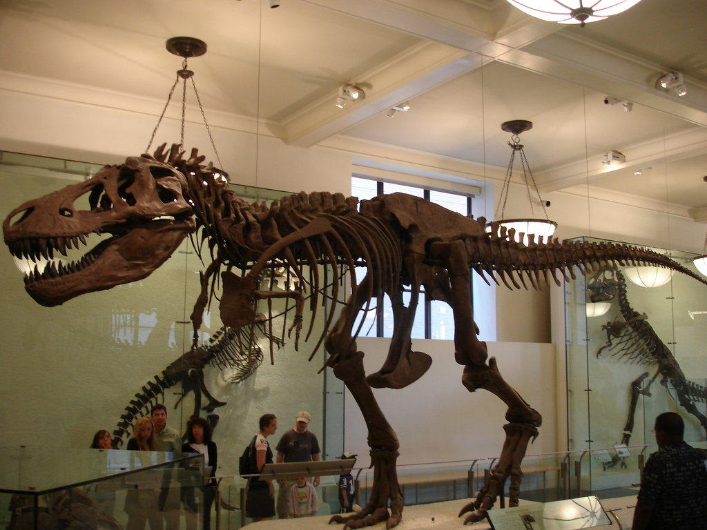 Bild Lebensgrosser Dino Zu Museum Of Natural History In New York
