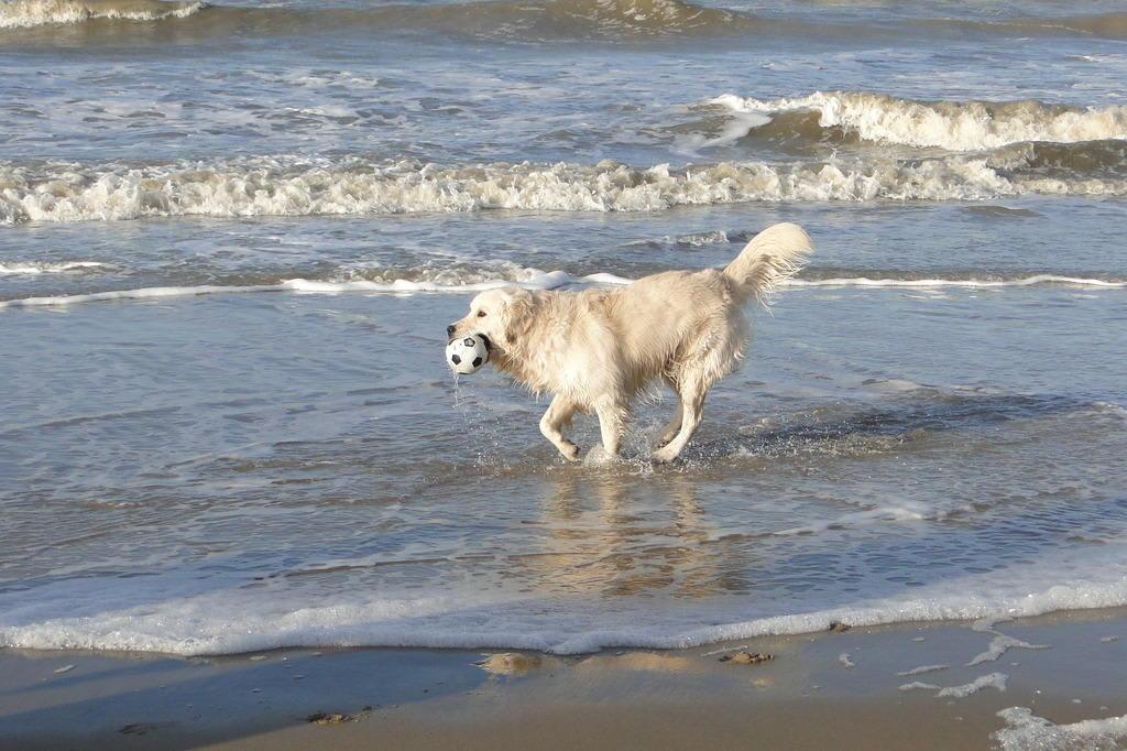 hunde am strand holland