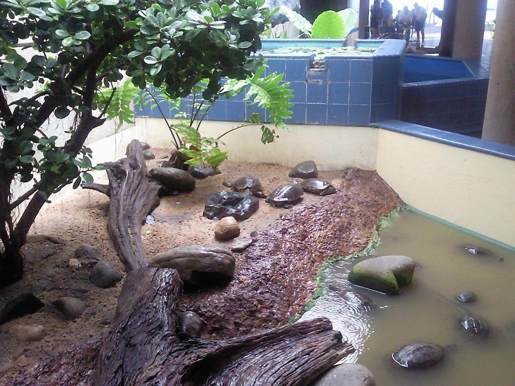 bild schildkr ten zu aquarium santo domingo acuario nacional in santo domingo. Black Bedroom Furniture Sets. Home Design Ideas
