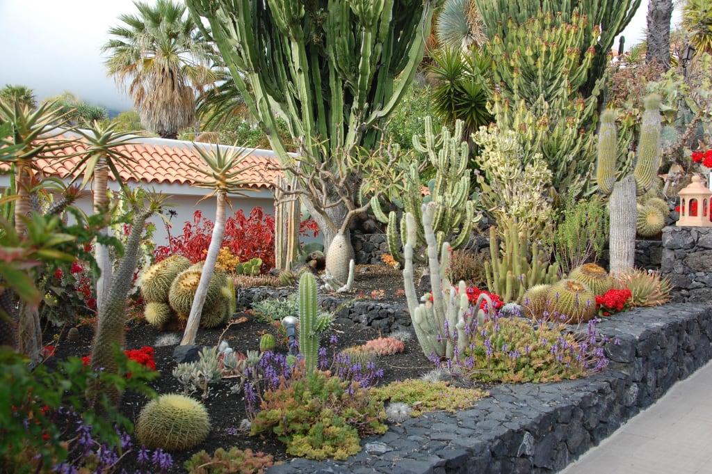 bild kakteengarten zu hotel la palma jardin in el paso. Black Bedroom Furniture Sets. Home Design Ideas