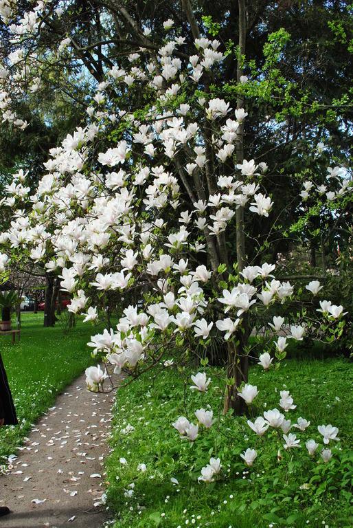 """Bild """"Blütenpracht"""" Zu Botanischer Garten Padua In Padua"""