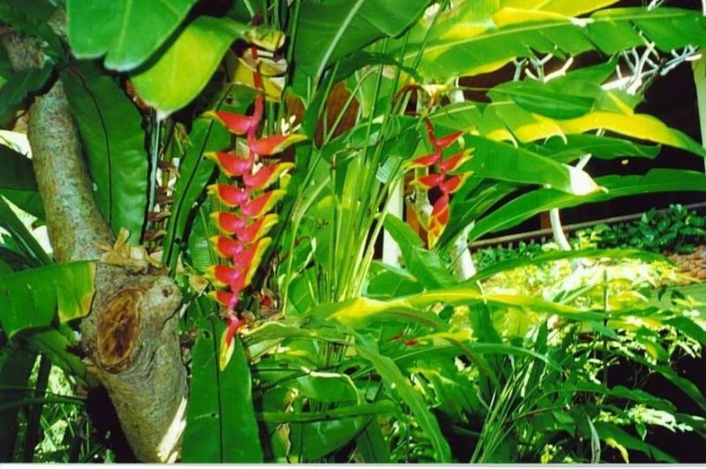 bild tropische pflanzen zu dominikanische republik in
