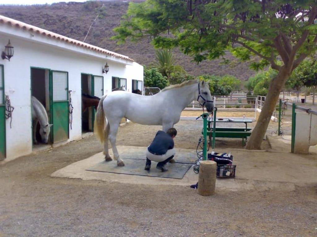 meine pferderanch
