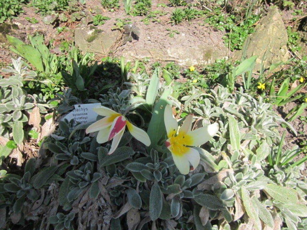 Bild Der Botanische Garten Im Marz 14 Zu Botanischer