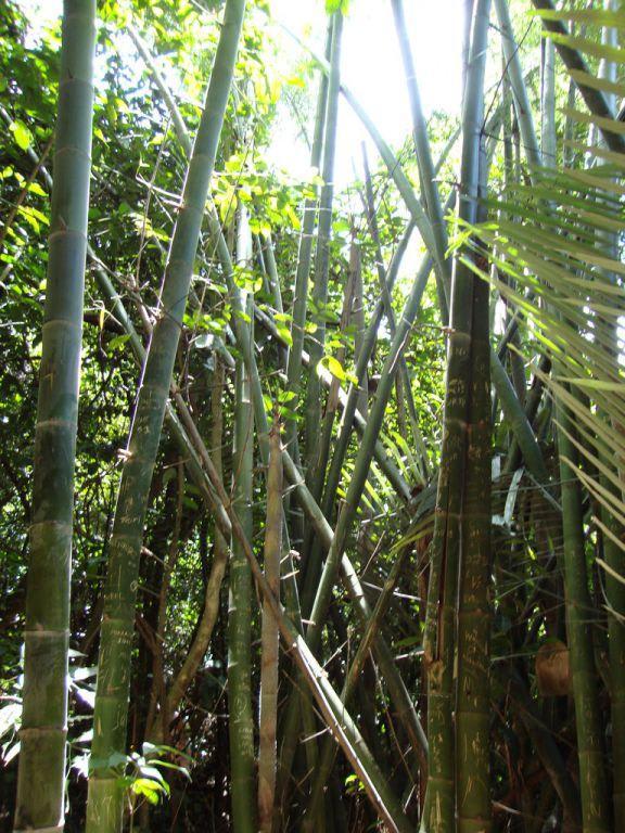 Bild Bambus Zu Pa La U Wasserfall In Zentralthailand