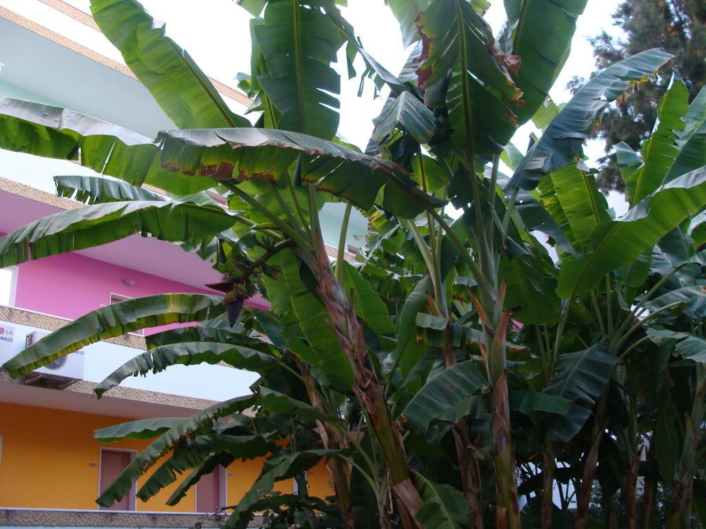 bild bananenpflanze in gartenanlage zu hotel golden. Black Bedroom Furniture Sets. Home Design Ideas