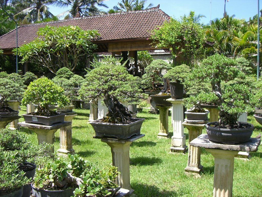 bild bonsai garten zu tropical bonsai sanur geschlossen. Black Bedroom Furniture Sets. Home Design Ideas