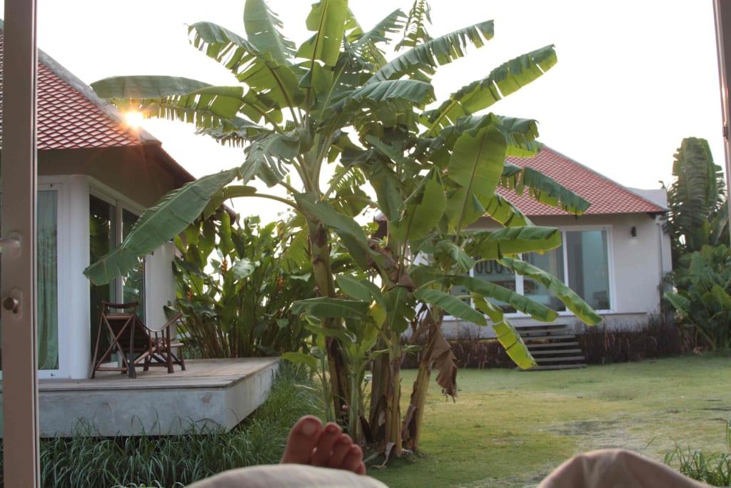bild bananenbaum im garten zu hotel samanea resort in pak chong. Black Bedroom Furniture Sets. Home Design Ideas