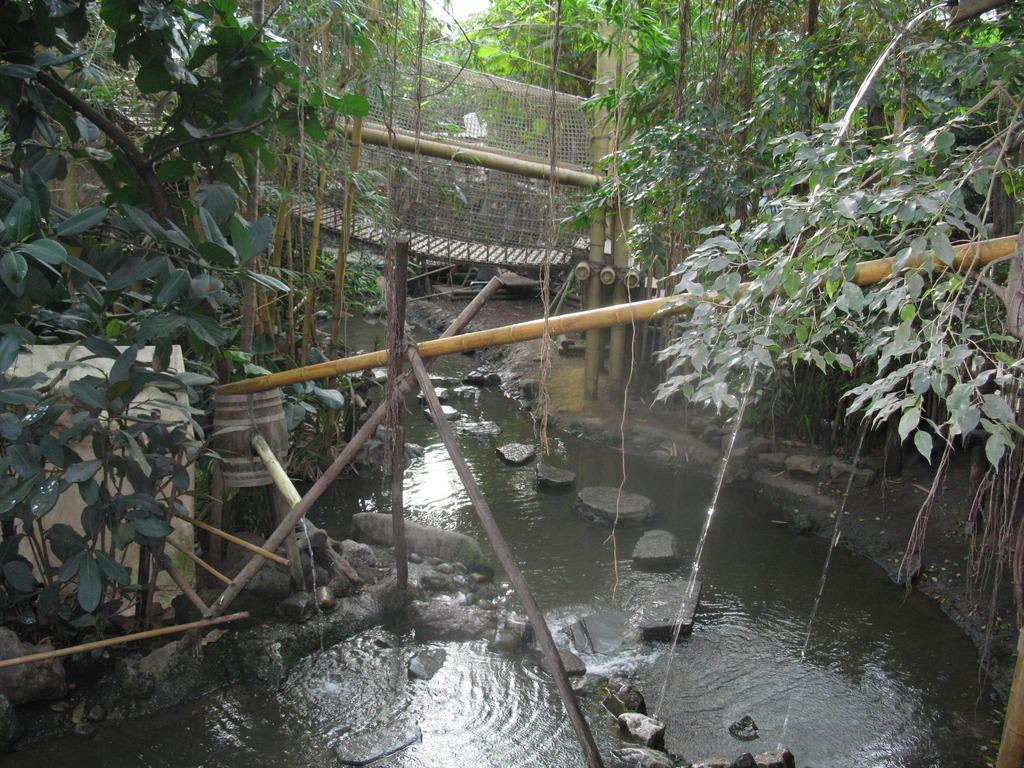 Bild Jungle Dome Zu Center Parc Het Heijderbos In Gennep