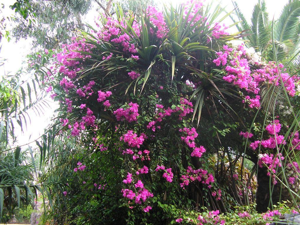 Wunderschöne Gärten bild wunderschöne gärten im tierpark zu jungle park las águilas in