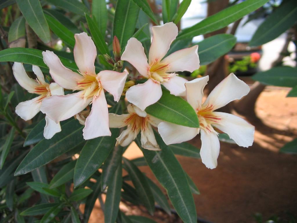 Bild Tolle Blumen Zu Agia Napa Ayia Napa In Agia Napa Ayia Napa