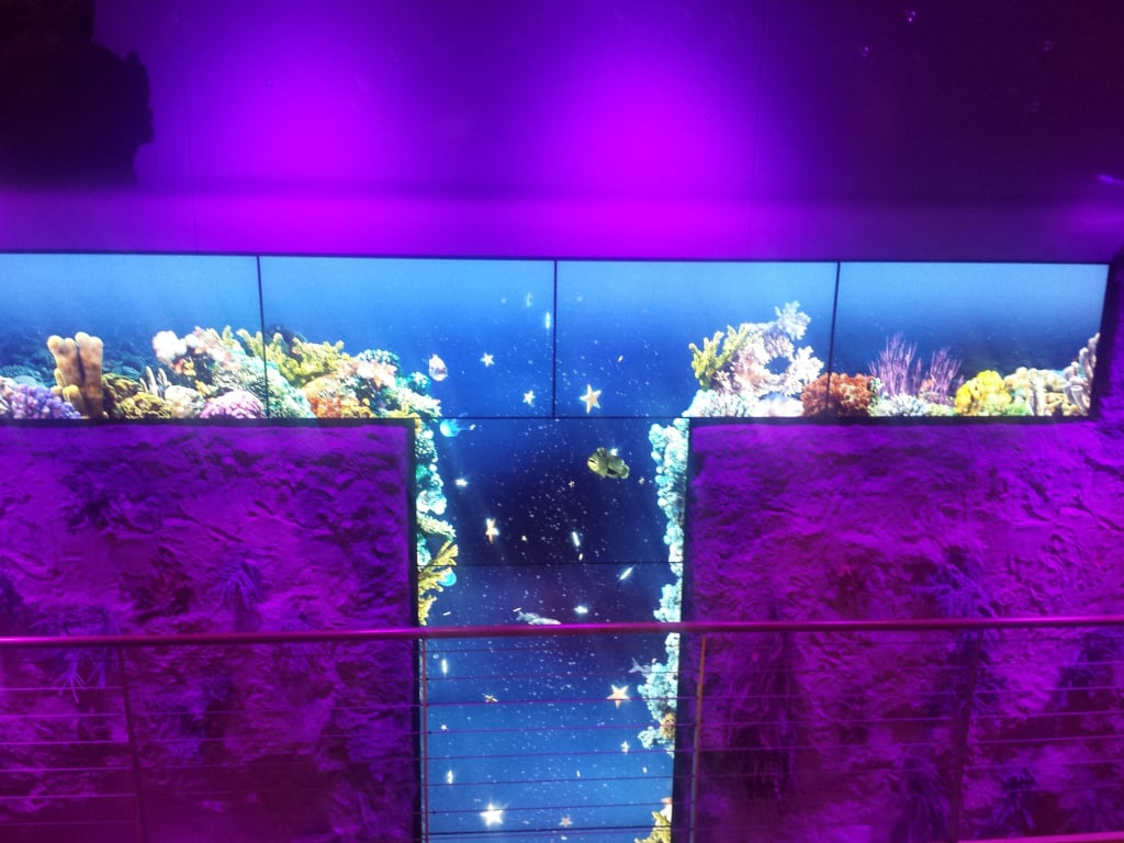 bild gro e video aquarium wand zu aidastella in. Black Bedroom Furniture Sets. Home Design Ideas
