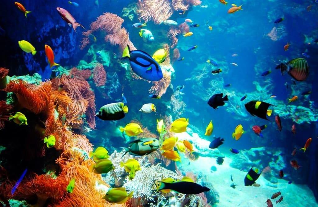 Photo de cleopatra travel hurghada photo poisson photo for Ouvrir fenetre plein ecran