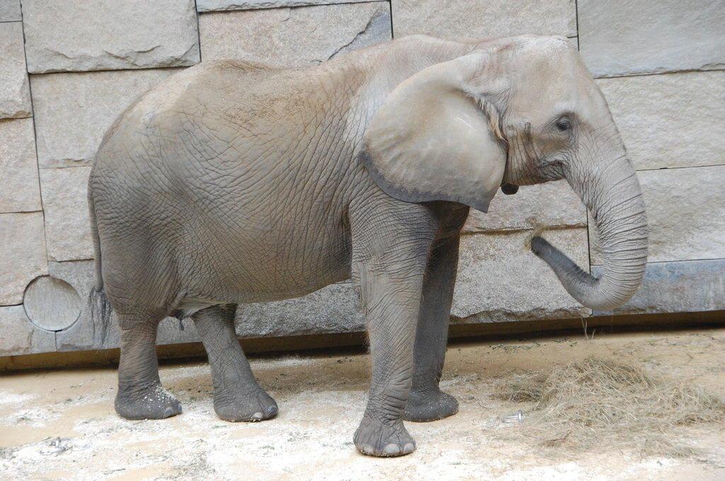 Bild Quot Elefant Tierpark Sch 246 Nbrunn Quot Zu Tiergarten