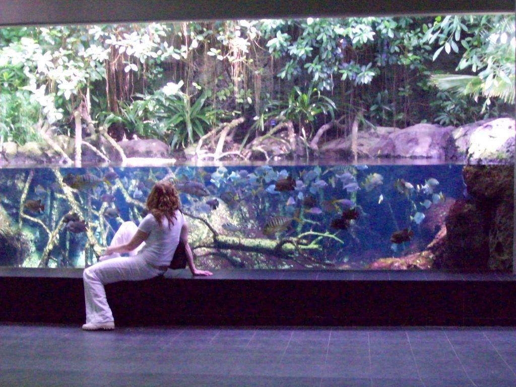 Bild fische 4 zu aquarium zoologischer garten in for Garten fische